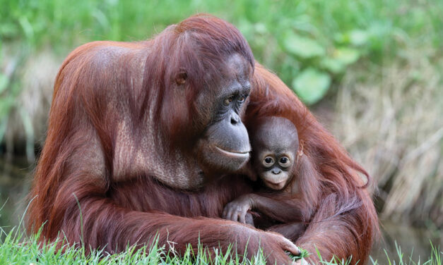ENVIRONMENTAL: Amazon Rainforests